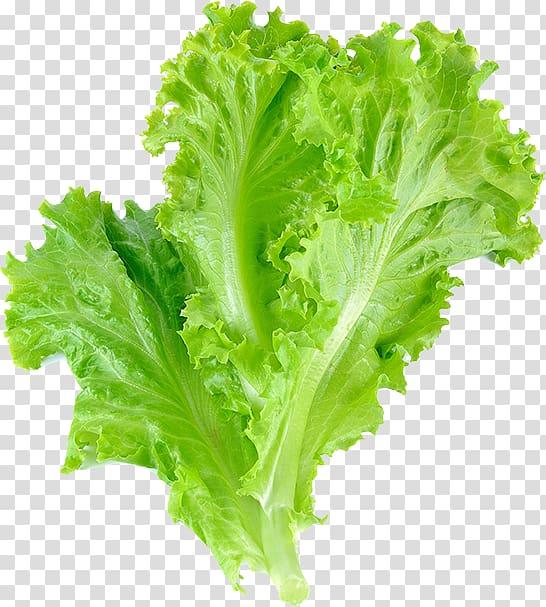 Romaine lettuce leaf vegetable. Cabbage clipart salad leave