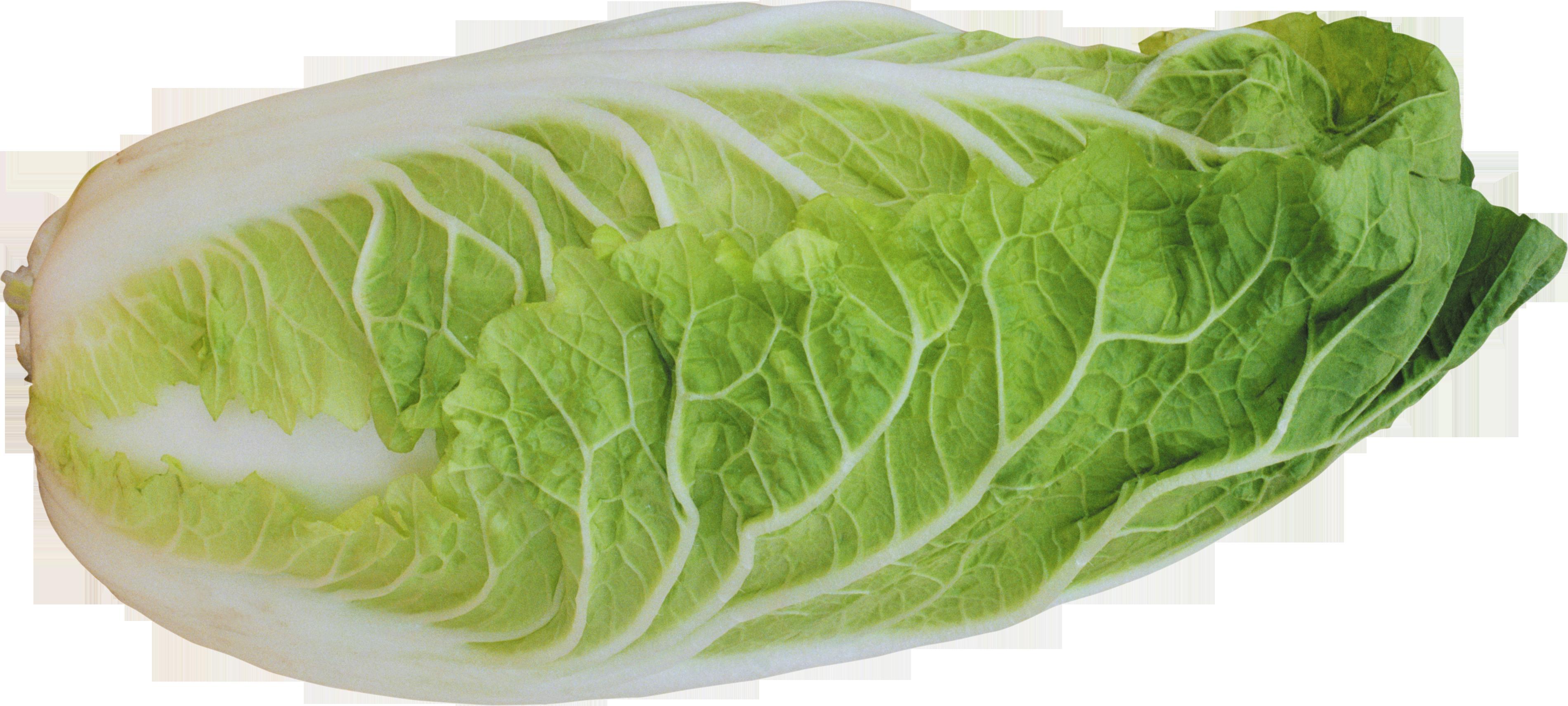 Lettuce clipart head lettuce. Salad png images free