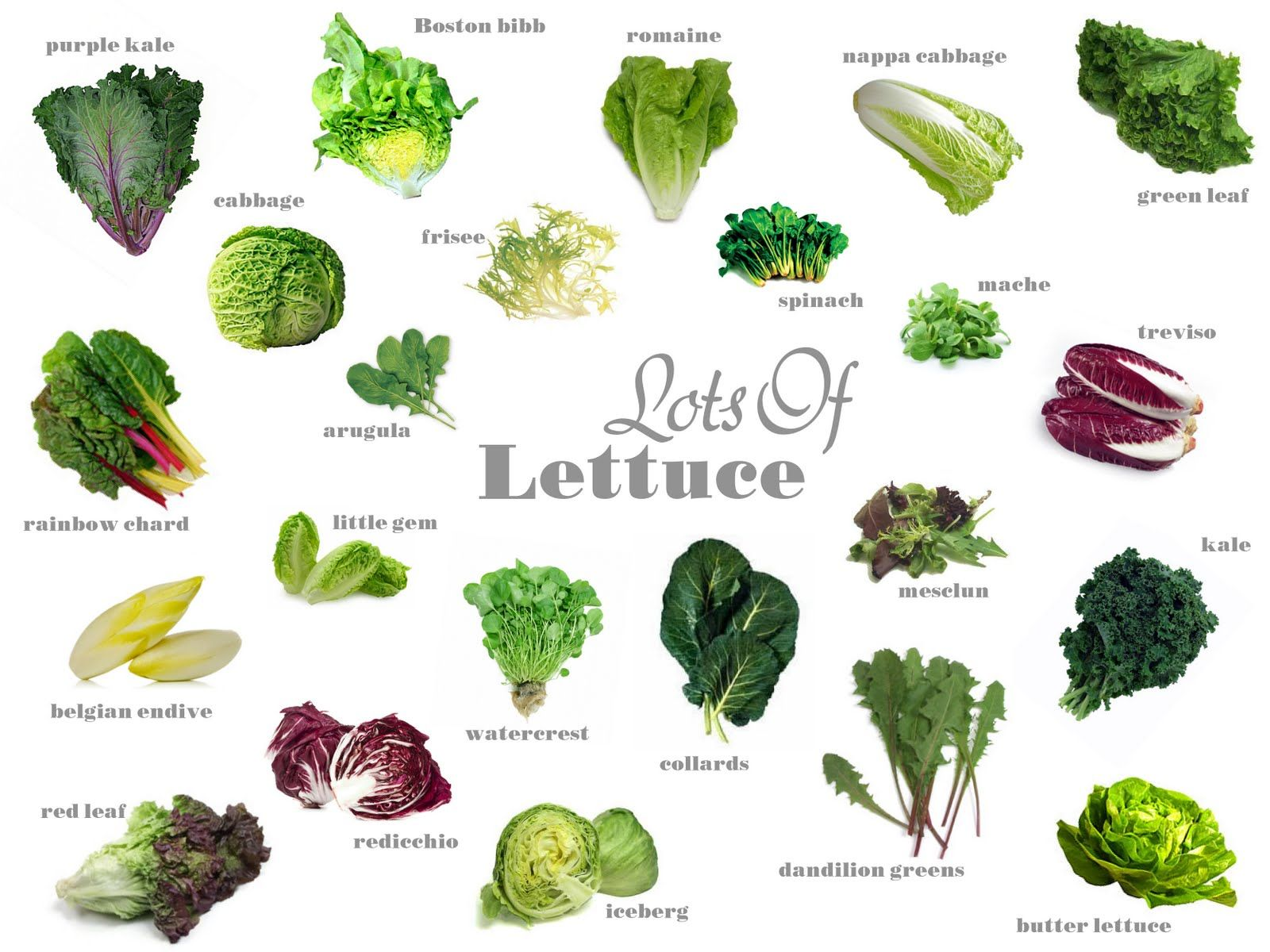 Know your produce lettuce. Cabbage clipart salad leave