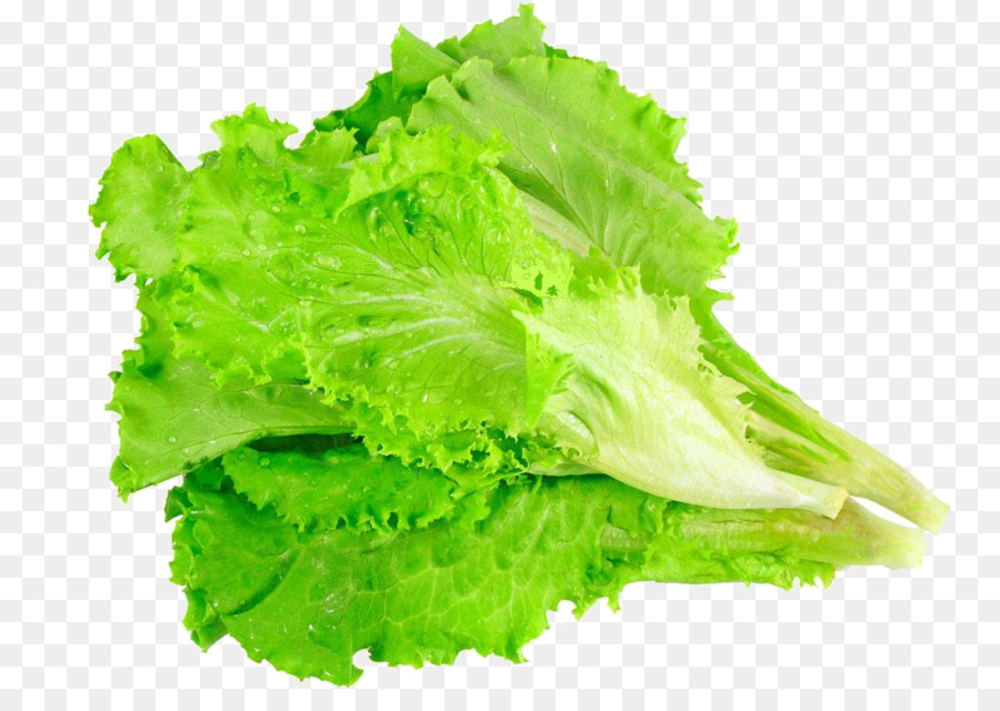 Romaine lettuce stock photography. Cabbage clipart salad leave