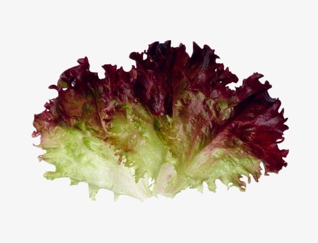 Purple lettuce vegetables leaves. Cabbage clipart salad leave