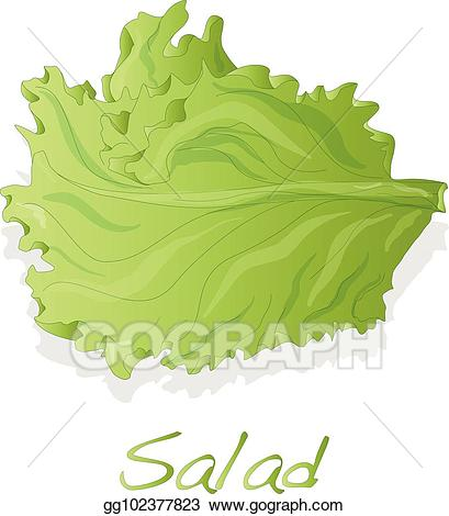 Cabbage clipart salad leave. Vector art fresh green