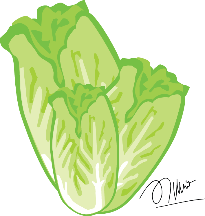 Cabbage clipart sawi. Mustard greens by almirafaiz