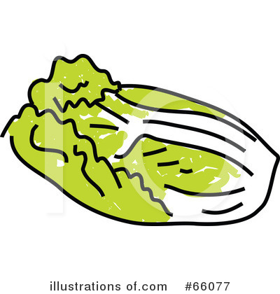 Cabbage clipart sawi. Illustration by prawny