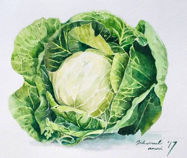 Cabbage clipart sitaw. Chinese vegetable pinterest and