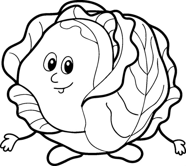 Cabbage clipart sketch. Drawing at getdrawings com