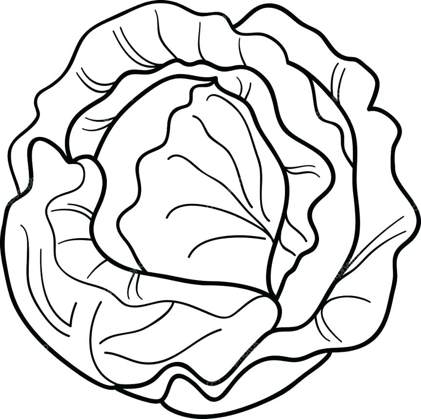 Cabbage clipart sketch. Lettuce leaf drawing at