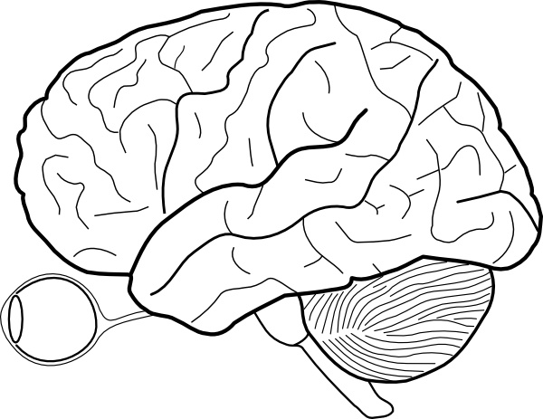 Brain pencil and in. Cabbage clipart sketch