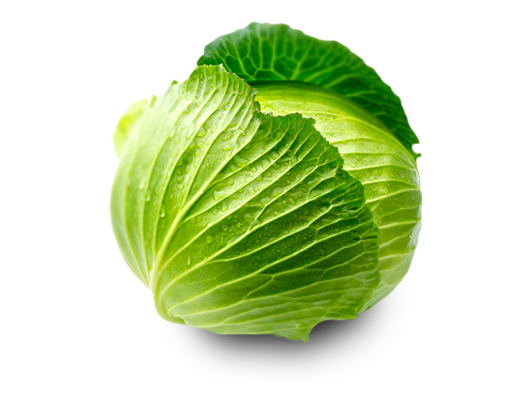 Cabbage clipart transparent background. Png images free download