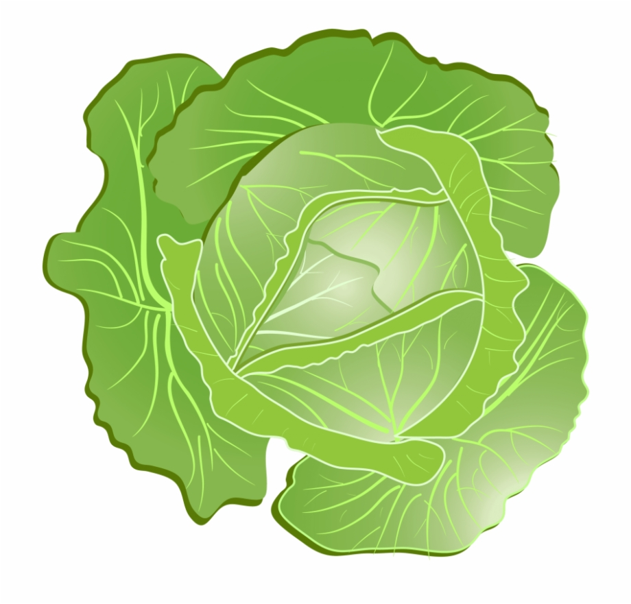 Cabbage clipart transparent background.