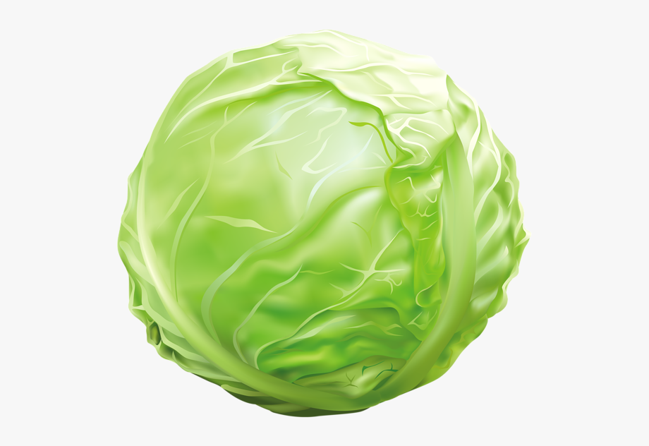 Png image graphics pinterest. Clipart vegetables cabbage