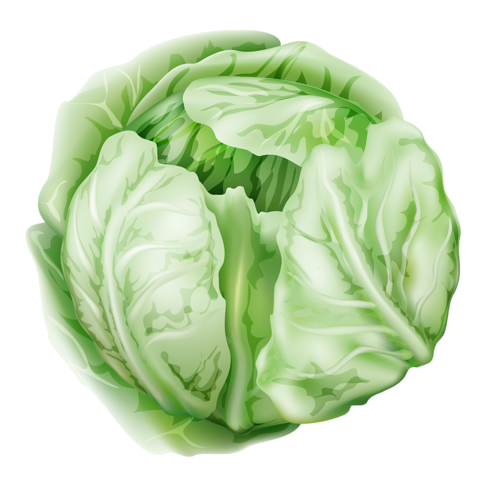 Cabbage clipart turkey slice. Vegetables collection png