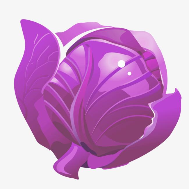 Purple vegetable ingredients vegetables. Cabbage clipart vector