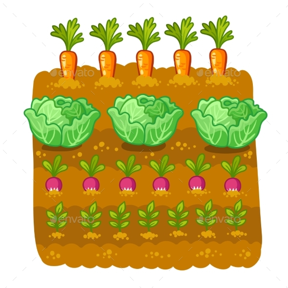 Cabbage clipart vector. Illustration with and radish