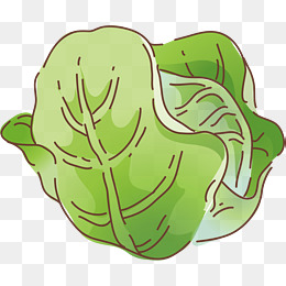 Cabbage clipart vector. Png images vectors and