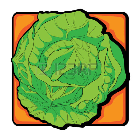 Cabbage clipart vector. Free download best on