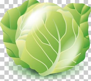 Cabbage clipart vector. Png images free download