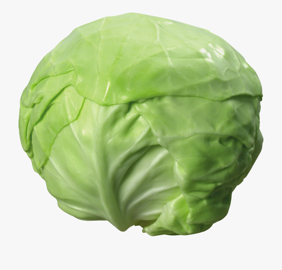 Transparent background free . Cabbage clipart vegetable