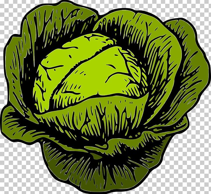 Cabbage clipart vegetable. Savoy png brassica oleracea