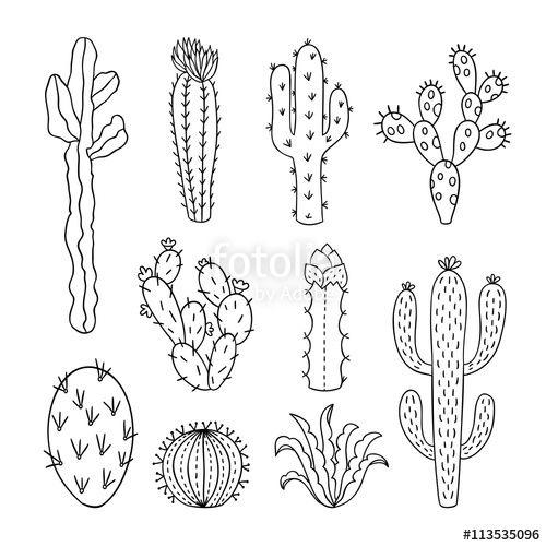 Cactus drawing. Clipart minimalist transparent free
