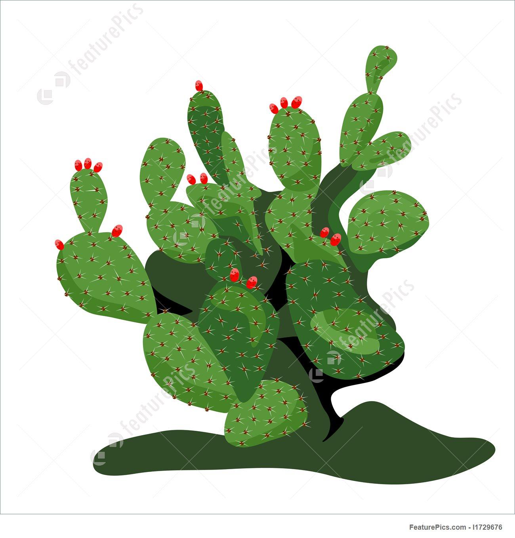 Cactus clipart nopal. Prickly pear drawing at