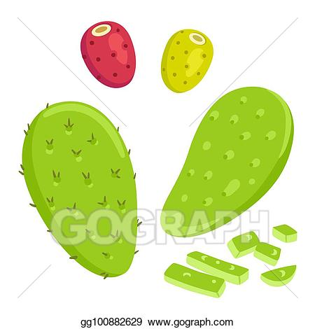 Cactus clipart nopal. Vector art with prickly