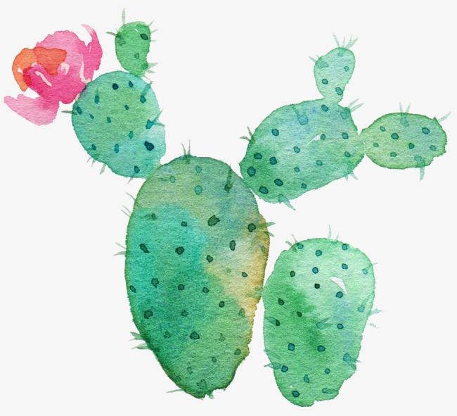 Cactus clipart nopal. Green flowering watercolor drawing