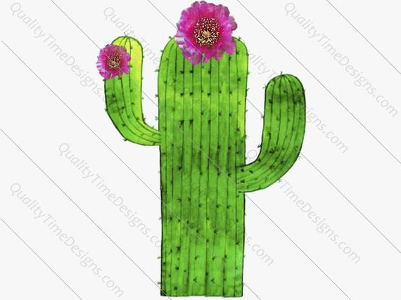 Cactus clipart transparent background. Png images with high