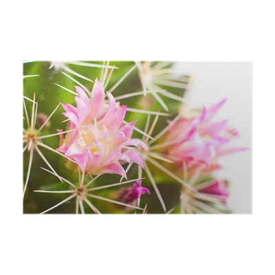 Poster pixers we live. Cactus flower png