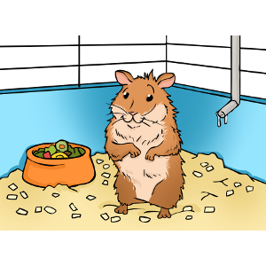 Choosing a hamster the. Cage clipart animal cage