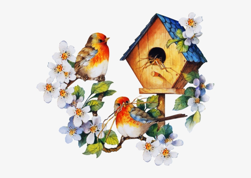 Bird houses cages ideas. Cage clipart animated