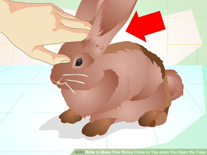 Cage clipart bunny. How to make your