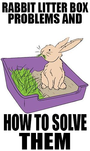 Cage clipart bunny. Rabbit litter boxes can