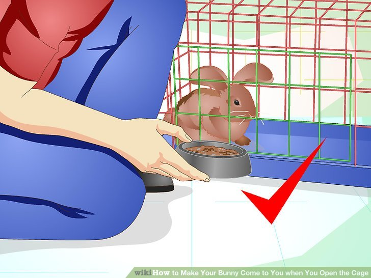 How to make your. Cage clipart bunny