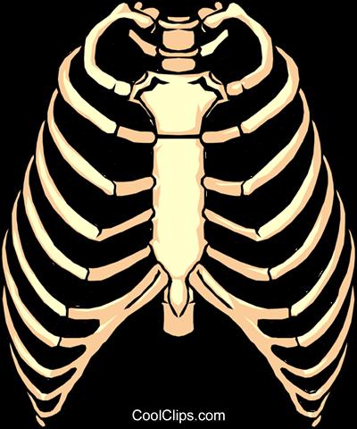 Cage clipart cartoon. New rib png transparent