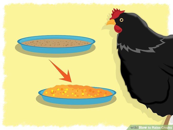 Cage clipart chicken.  ways to raise