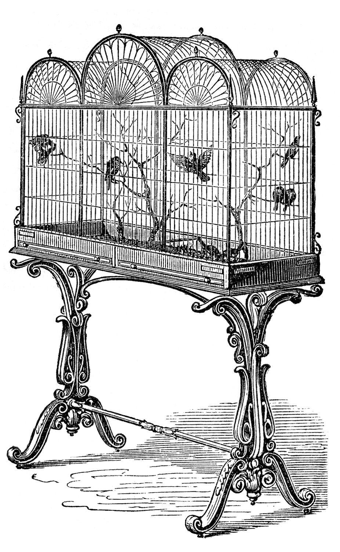 Cage clipart fancy.  vintage bird clip