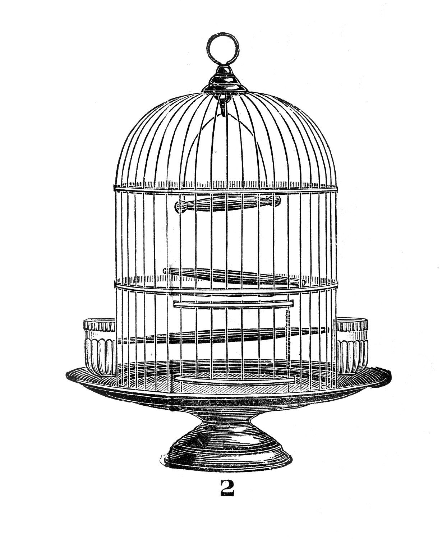 vintage bird clip. Cage clipart fancy