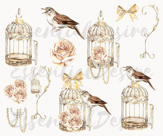 Cage clipart golden bird. Pin by marie on