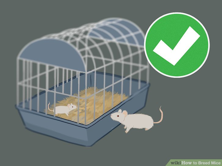 Cage clipart mouse cage.  ways to breed