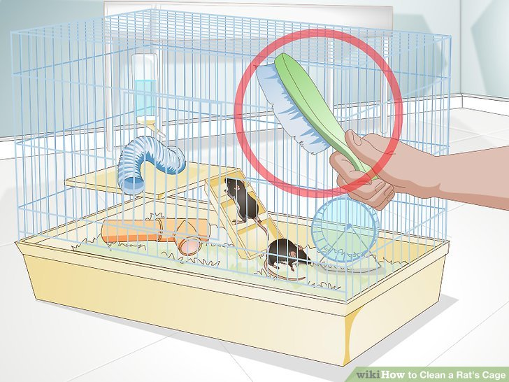 How to clean a. Cage clipart mouse cage