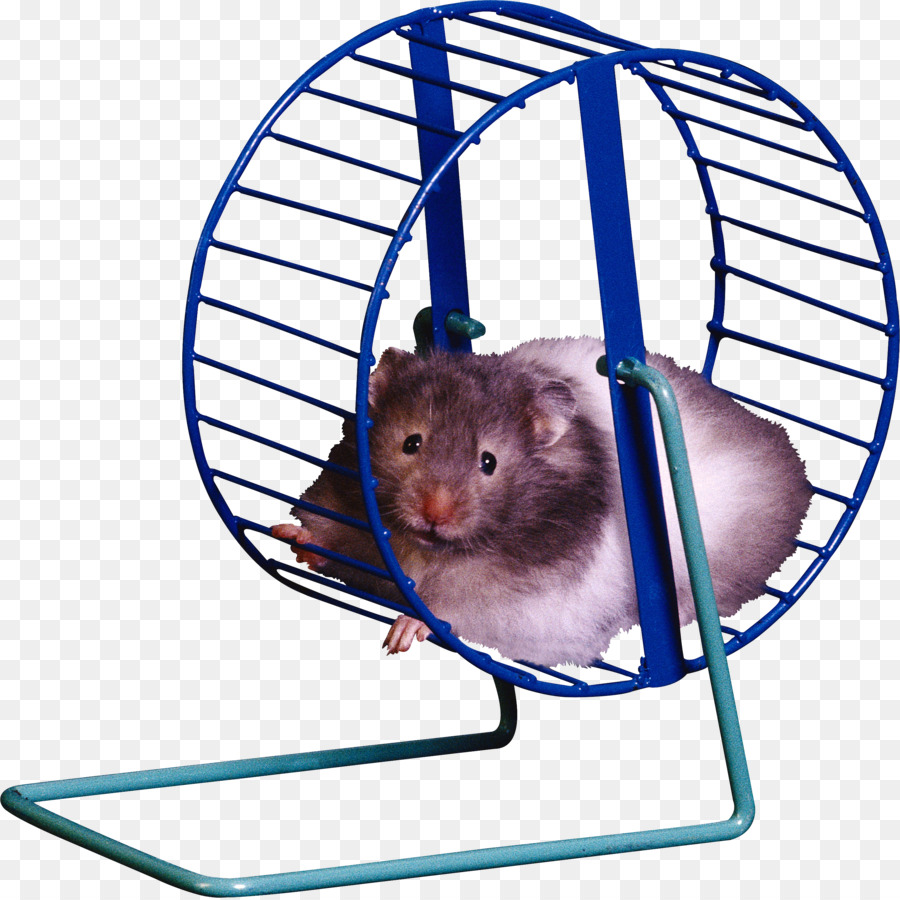 Hamster wheel clip art. Cage clipart mouse cage
