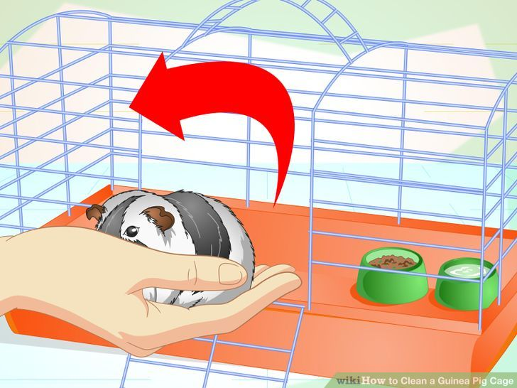 How to clean a. Cage clipart pig