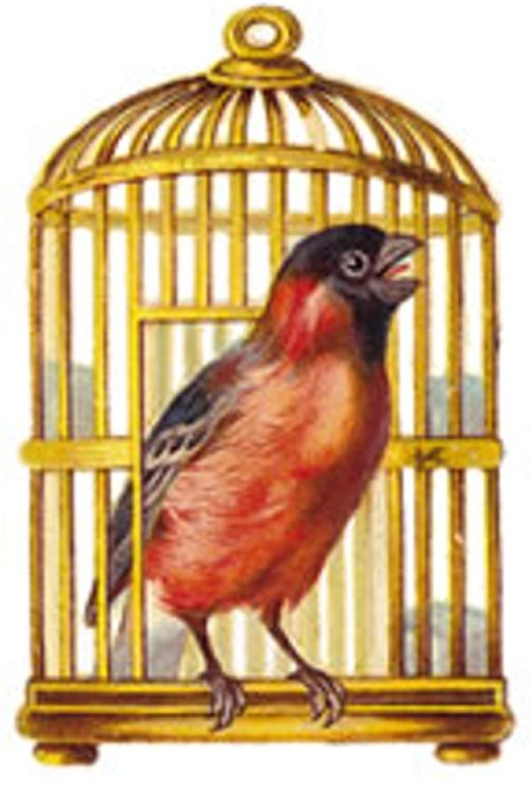 best images on. Cage clipart printable
