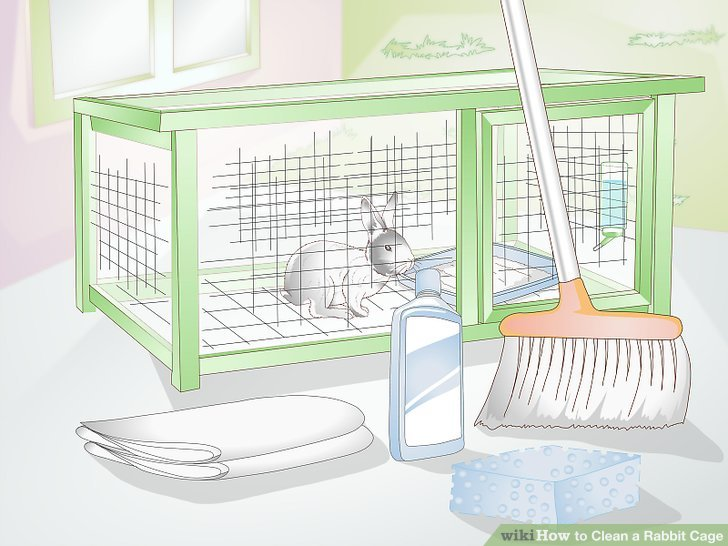 How to clean a. Cage clipart rabbit cage