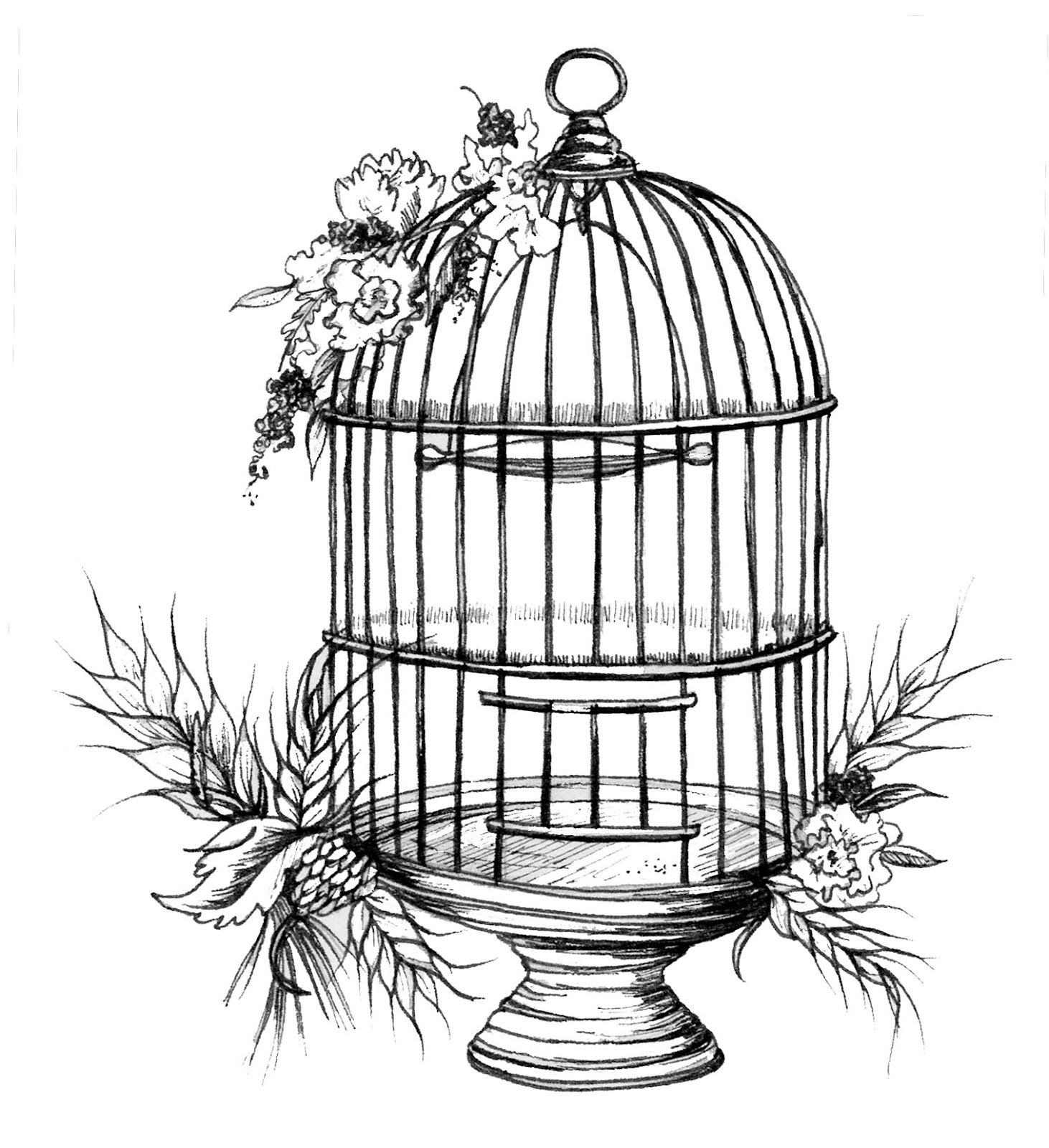 Cage clipart sketch. Bird birds and their