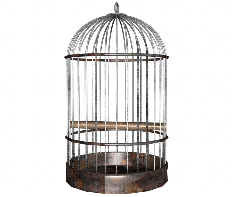 Cage clipart transparent background. White bird png image