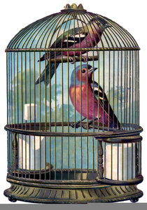 Free bird images at. Cage clipart vintage