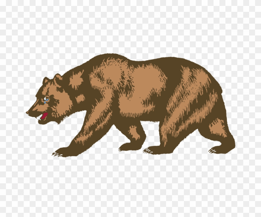 Com brown drawing . California clipart bear grizzly california