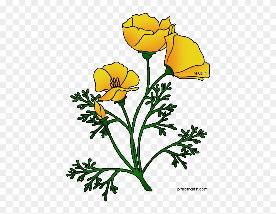 Poppy clipart golden poppy. Ca california drawing